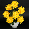 Chrysanthemum x 7 Q988
