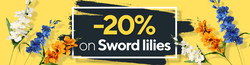 Promotion -20% on Sword lilies